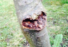 Bark Problem