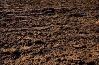 Loam Soils